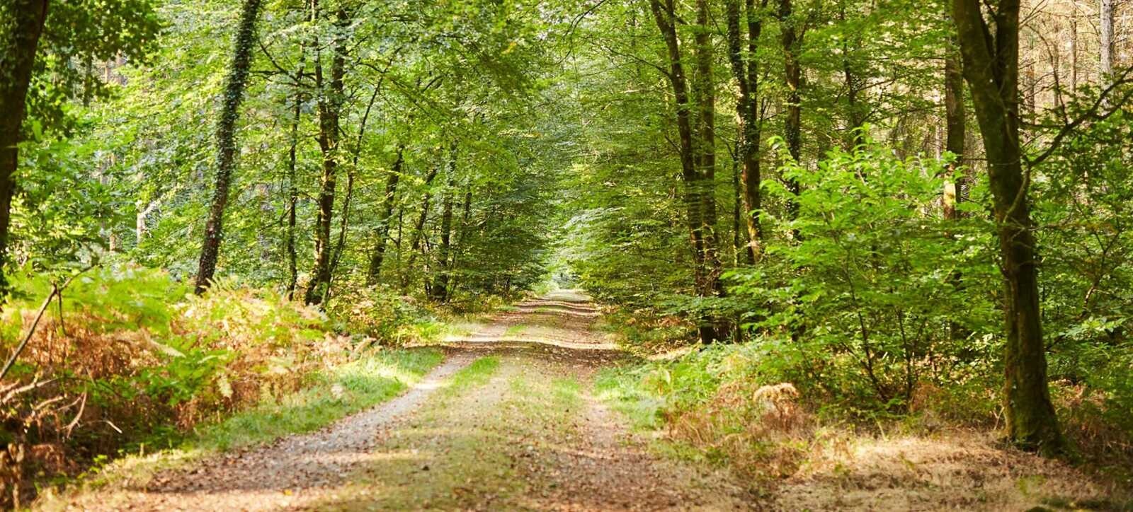 The Camors Forest Nature S Paradise